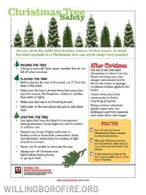 Tips for taking care of your Christmas tree
